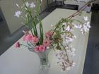 藤の花(白)